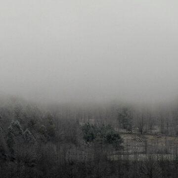 Misty Morn by cameraflash