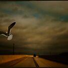 Sudden Flight by Mary Ann Reilly
