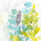 Banksia study 2    by ClairBremner