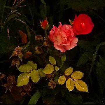 Sleeping Garden by sagespirit