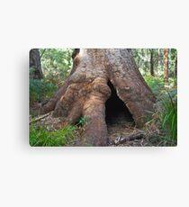 Ancient Tingle Tree. Canvas Print