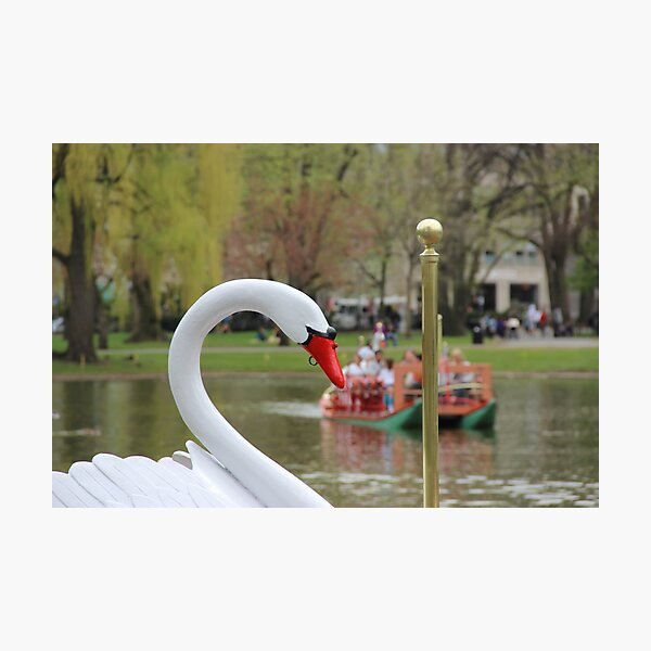Boston Public Garden Swan Boats Photographic Print