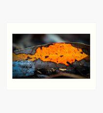Translucent Leaf Art Print