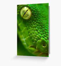 Green Python, Papua New Guinea. Greeting Card