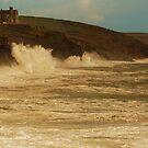 SEA CREEPER  by andrewsaxton