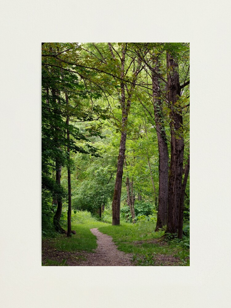 Alternate view of A walk in springtime forest Photographic Print