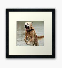 Bounding Dog-Boronia,Victoria Framed Print