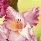 Gladiolus by Victoria  _Ts