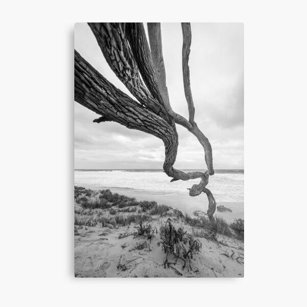 Scar Tree Metal Print
