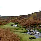 Moorland Stream by Trevor Kersley