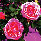 Magenta Pink Roses by Jerald Simon (Music Motivation - musicmotivation.com) by jeraldsimon