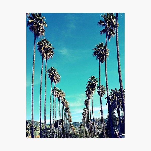 Los Angeles Palm Trees  Photographic Print