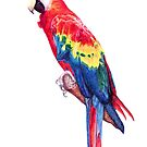 Scarlet Macaw Parrot by lpodraw