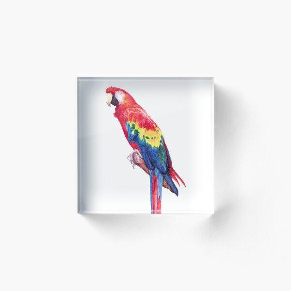 Scarlet Macaw Parrot Acrylic Block