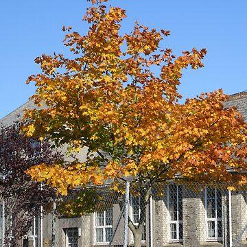 Tree In Autumn by lezvee