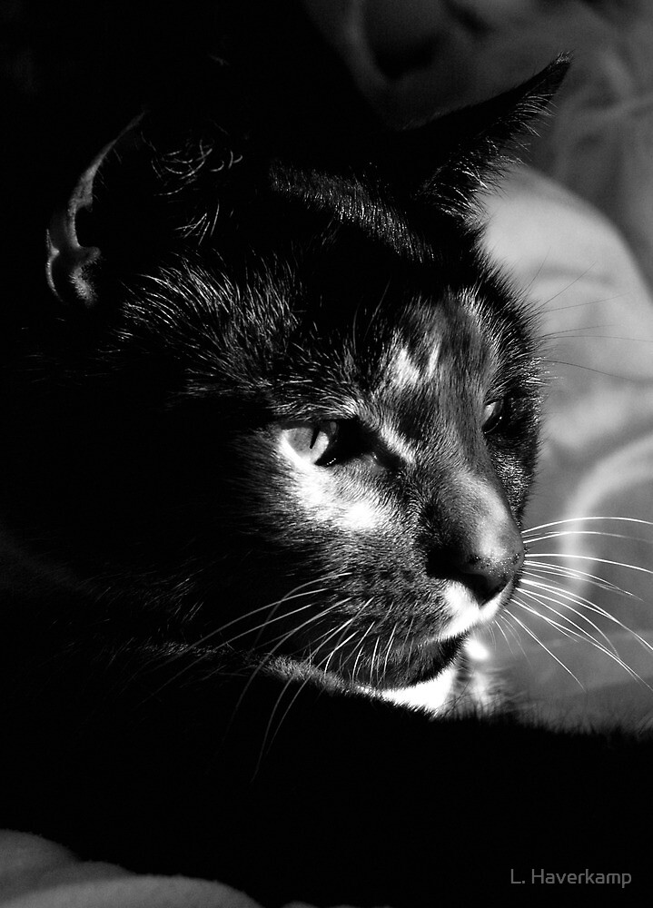 Feline Contemplation. by L. Haverkamp