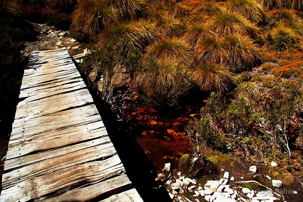 Lake Windermere to New Pelion, Overland Track, Tasmania by Roger Barnes