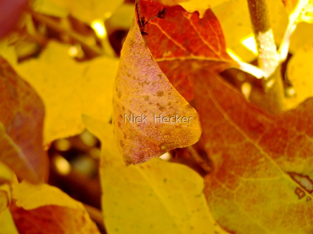 Changing Leaves by Nick  Hecker