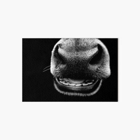 Black Cow Nose Art Board Print