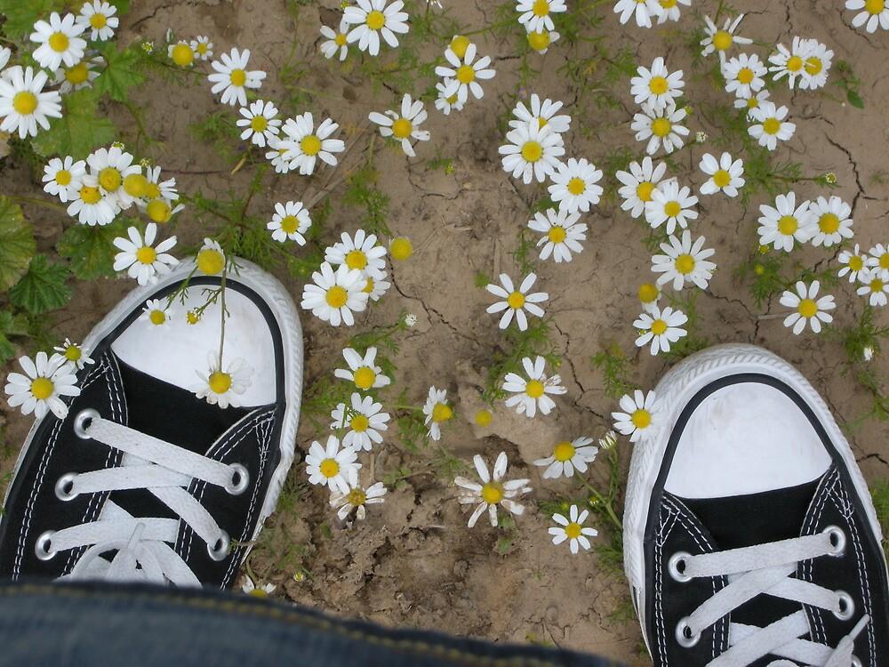 Converses on daisies by dilruba