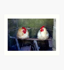 Chickens in the harbour, Essaouira Art Print