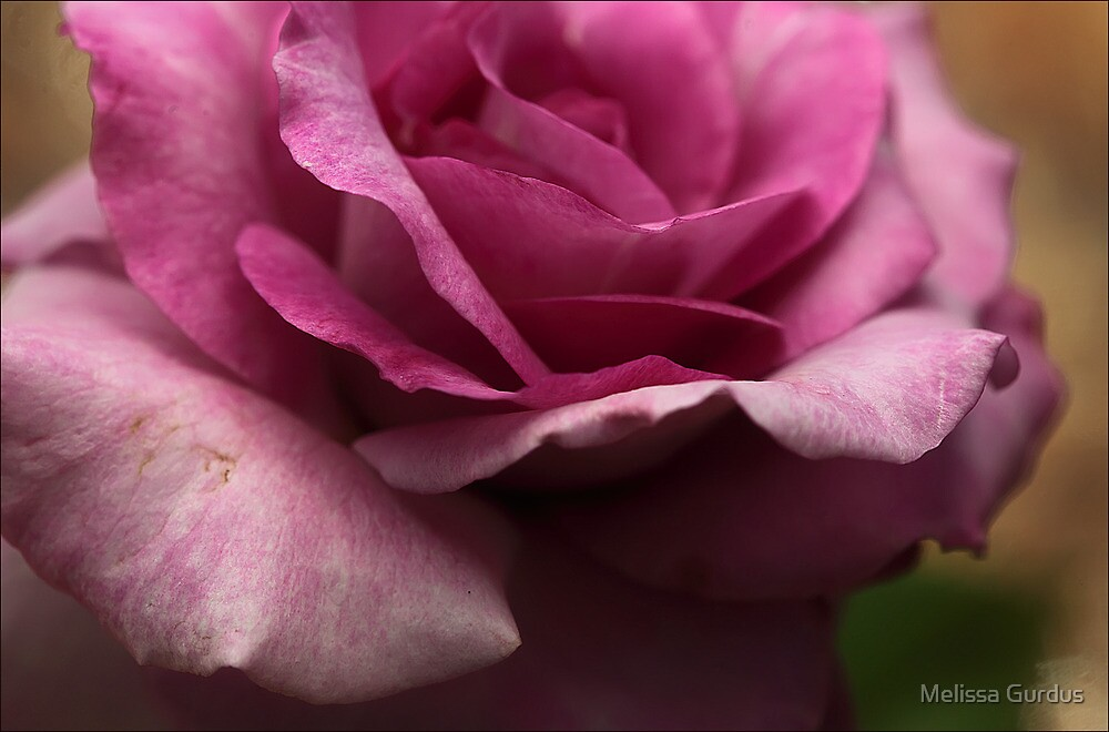 Diffusion Filter Pink Rose by Melissa Gurdus
