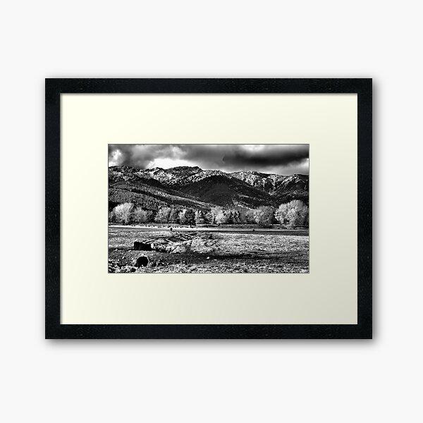 White Face Ranching Framed Art Print