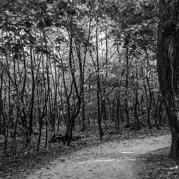 Buda hills by PeterCseke