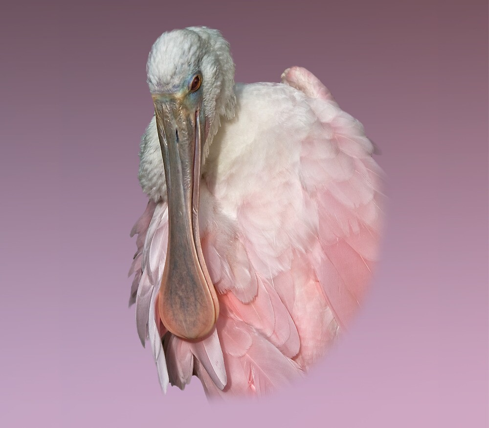 Roseate Spoonbill by Delores Knowles