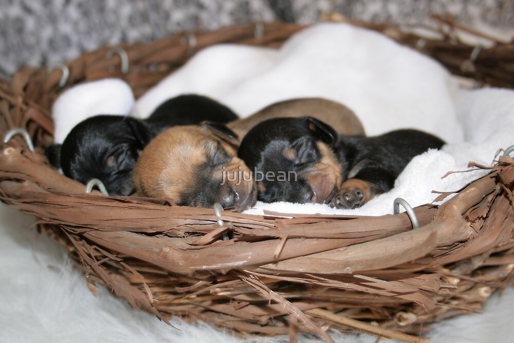 Basket Full of Puppies by jujubean