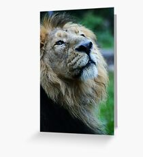 Ashok the Lion King Greeting Card