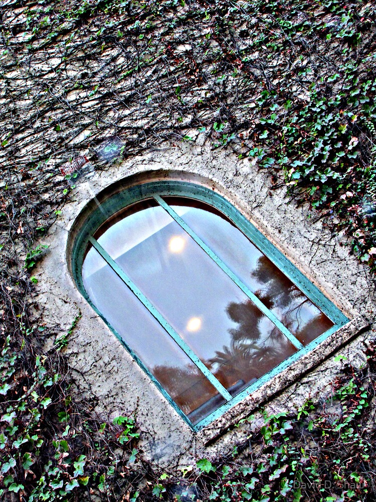 Looking in by David Shaw