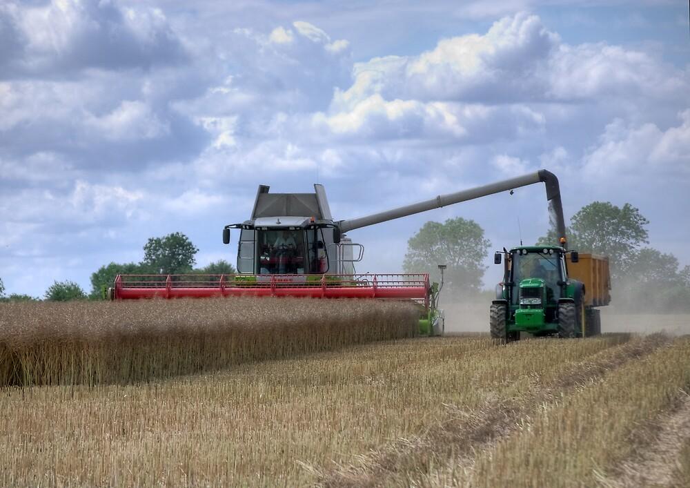 Harvest Time by lynxpilot