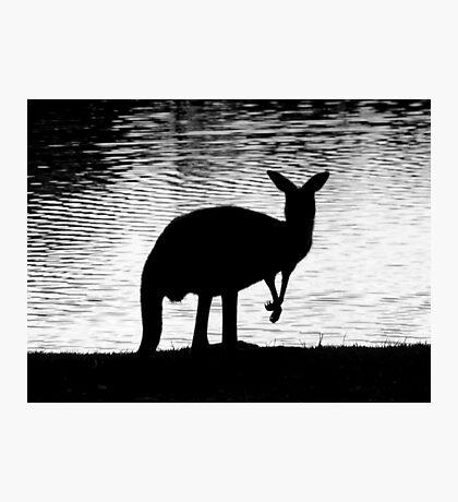 Little Roo'd Photographic Print
