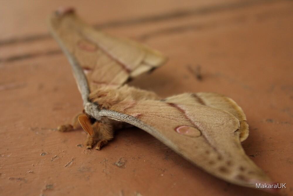 Big moth...massive feet....strange tongue by MakaraUK