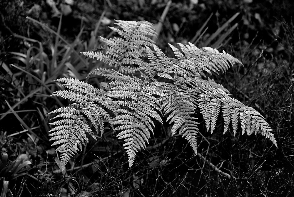 Fern by Lindamell