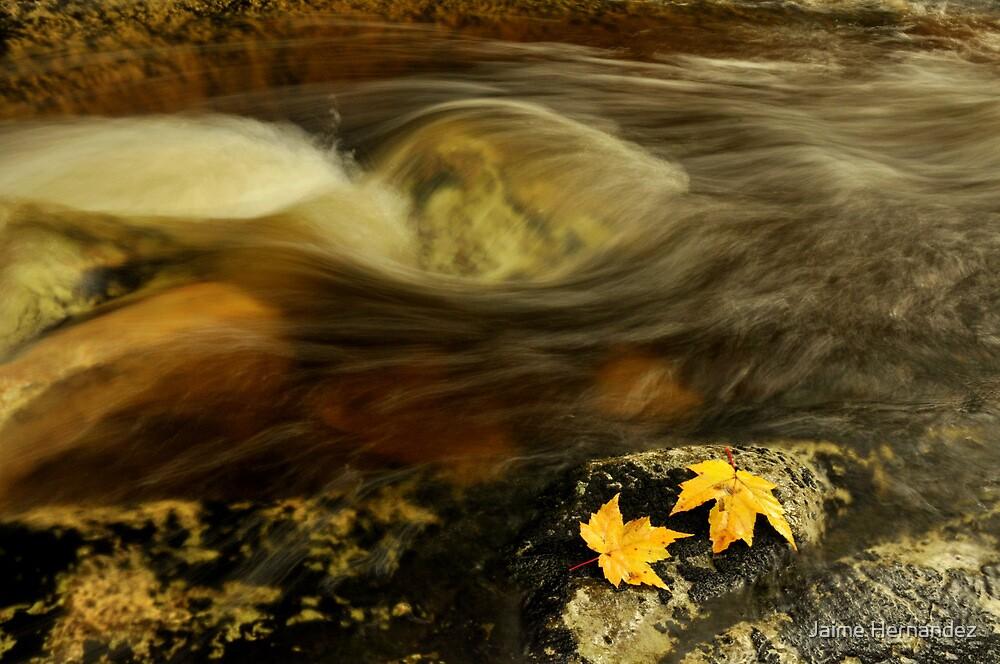 Flowing Fall by Jaime Hernandez