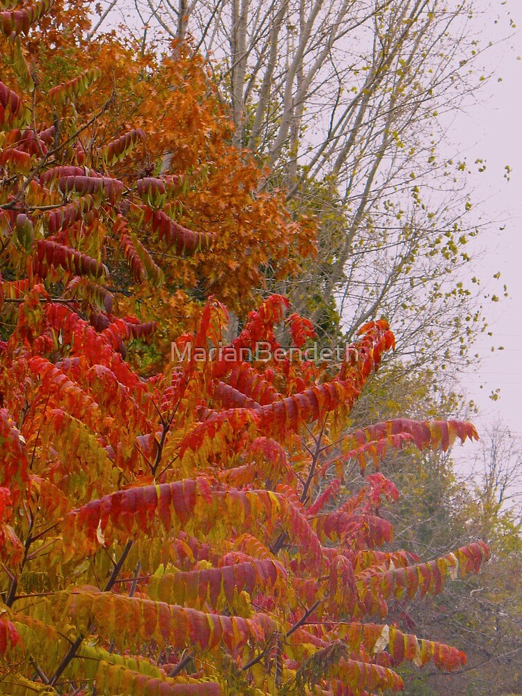 Rust'n Ready Autumn by MarianBendeth