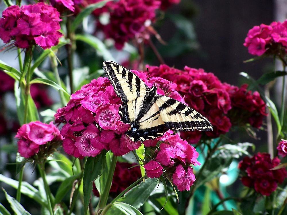 Butterfly by Ronda Sliter
