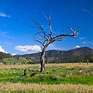 Spring safari, Lake Eildon 2009 by kraftyman