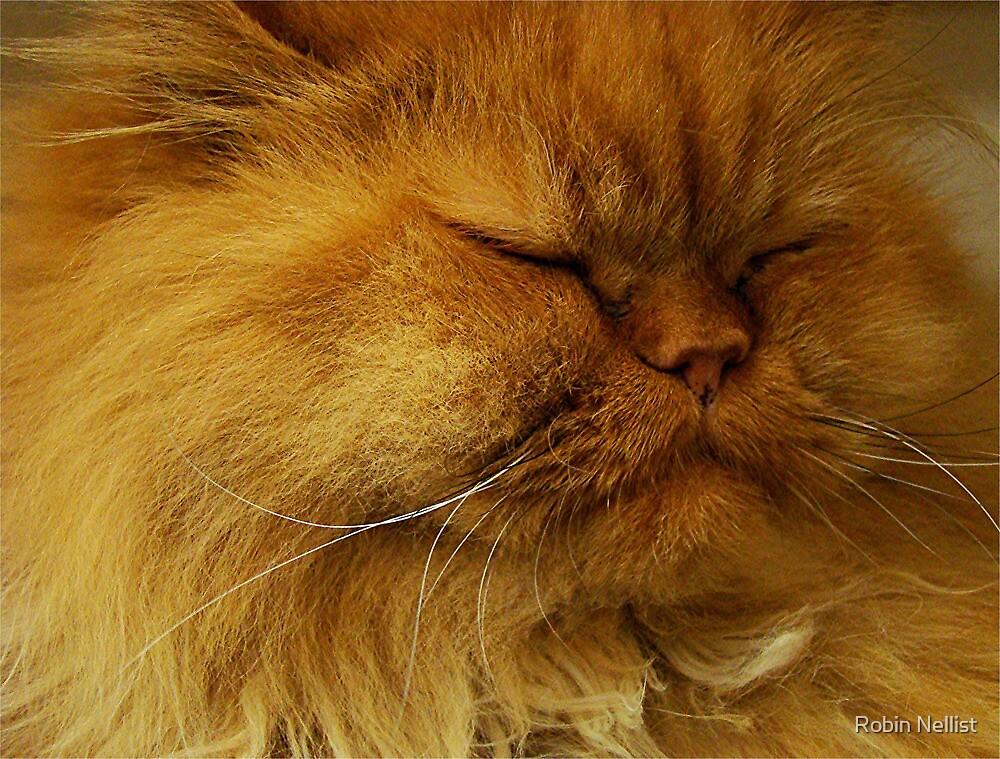 Ginger shelter cat by Robin Nellist