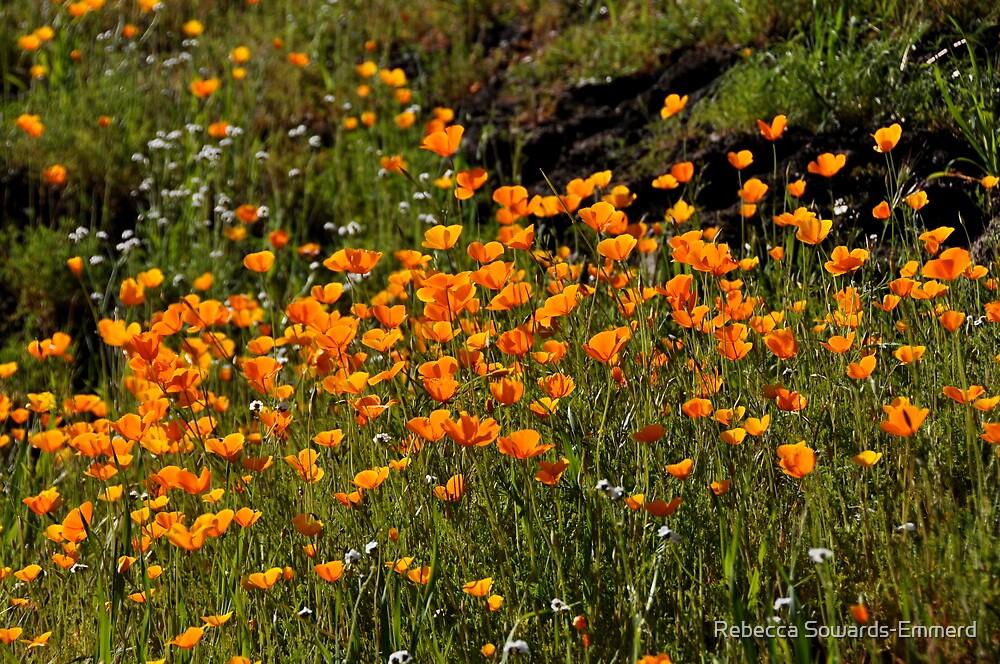 California Poppies, Merced Canyon by Rebecca SowardsEmmerd