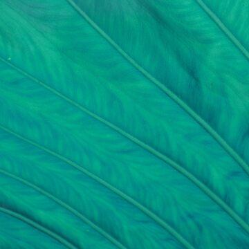 Liquid Leaf 2.0 by lunimoon