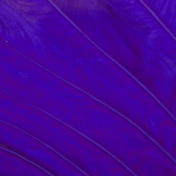Liquid Leaf 3.0 by lunimoon
