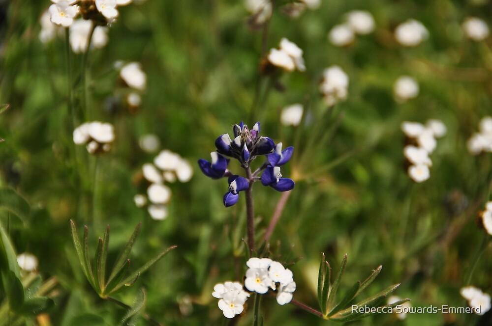 Douglas Lupine in a field of Popcorn Flower - Sierra Azul by Rebecca SowardsEmmerd