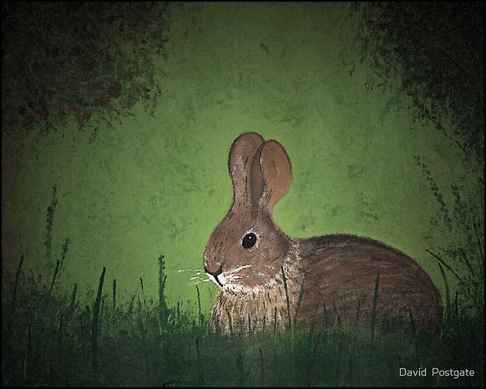 The Rabbit by David  Postgate