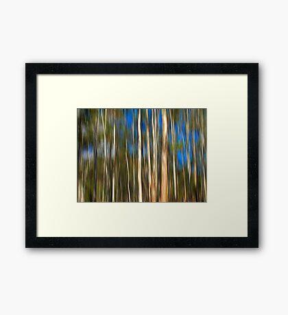 Among The Gum Trees Framed Print