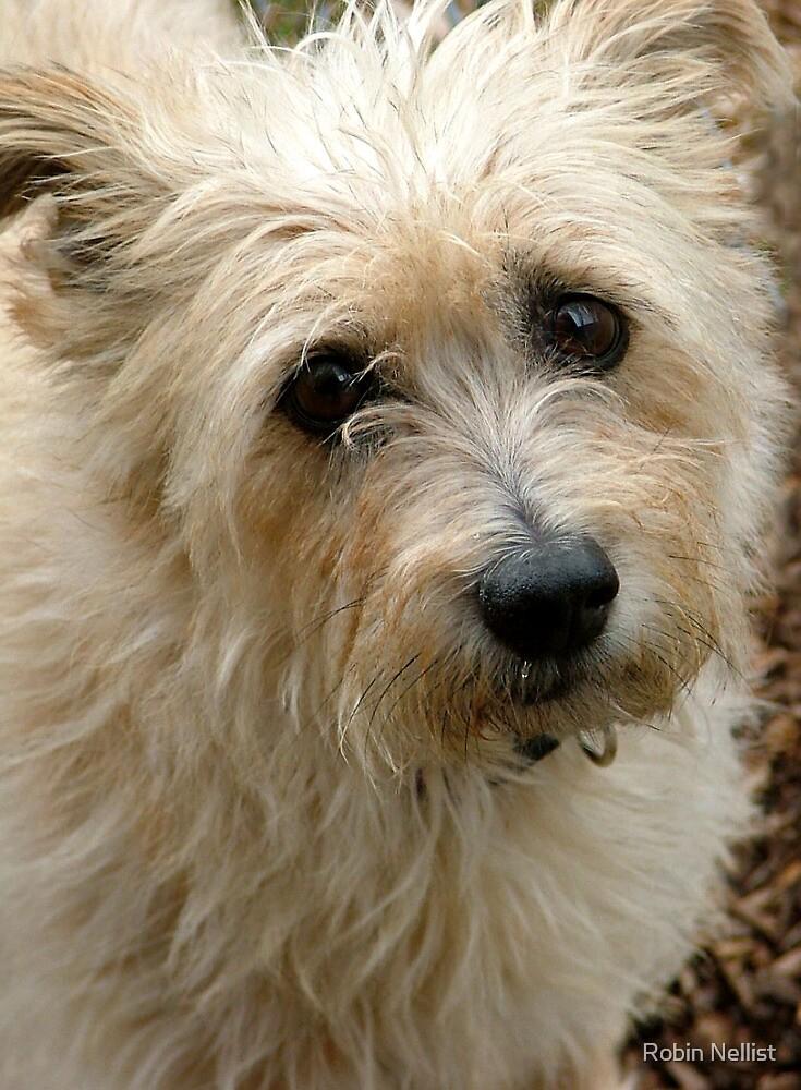 Terrier by Robin Nellist