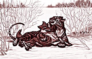 A tiger and his wolf by Chaharra Gilman