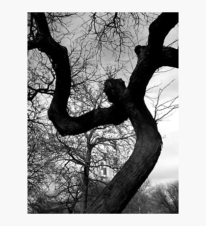 Creepy Faced Tree Photographic Print